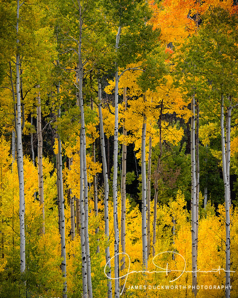 Vail Fall Color