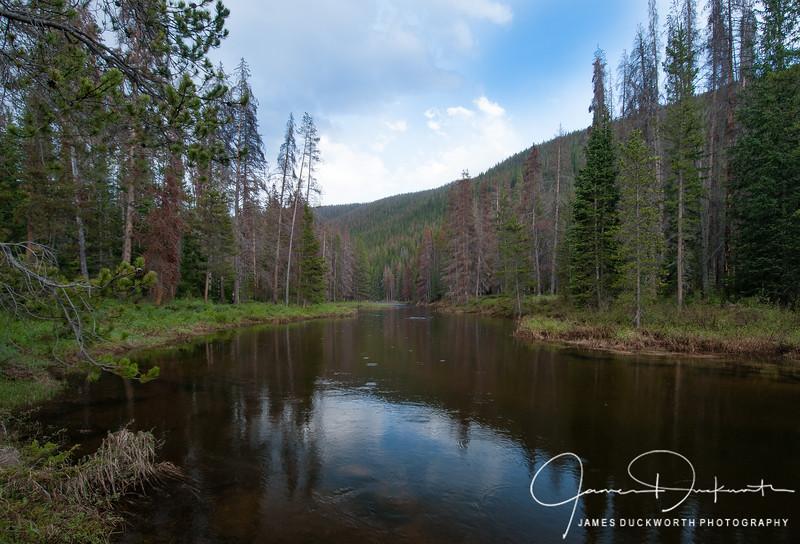 Piney Creek Summer