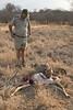 Head Ranger Wendel Hough finds Savannah with a fresh Impala kill.