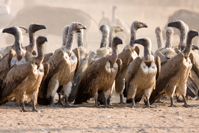It's a Vulture convention.