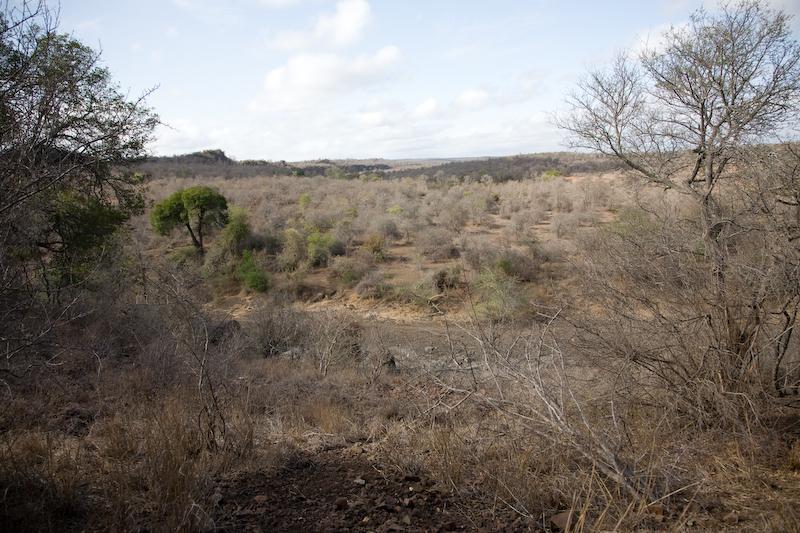 Typical Kruger Landscape