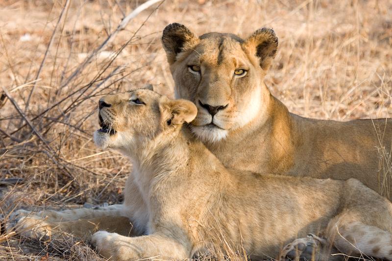 Mother & Cub