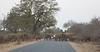 Gridlock in Kruger