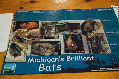 We participated in a night activity about MI bats at the Silver Lake State campground