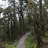 Haast Pass Lookout walk