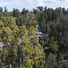 West Coast Tree Top Walk