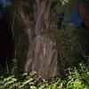Bushy Park - night visit