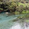 Te Waihou Walkway and Blue Spring