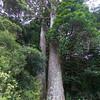 Twin Kauri Scenic Reserve walk
