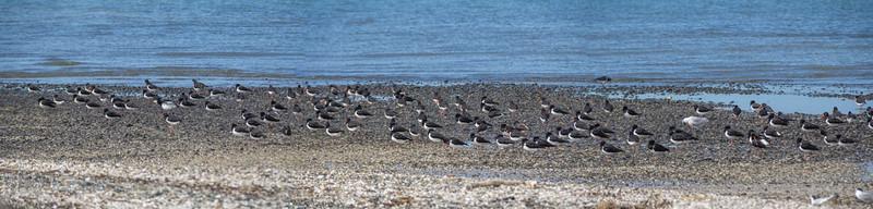 Birds at Miranda Beach