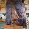 Ancient Kauri Kingdom