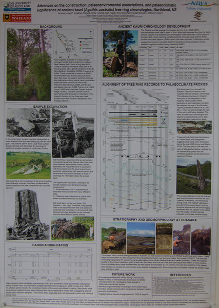 Nelson's Kaihu Kauri