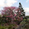 Auckland Botanical Gardens