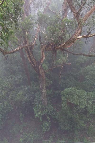 Illawarra Fly Tree Top Walk