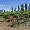 Helm Wines Vines