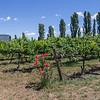 Helm Wines Vines