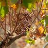 Herdade do Esporao Winery