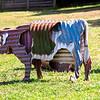 Prancing Horse Winery visit