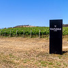 Tolpuddle Wines Richmond vineyard