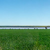 Crops near Gunyidi Lakes