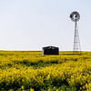 Windmill in the Canola