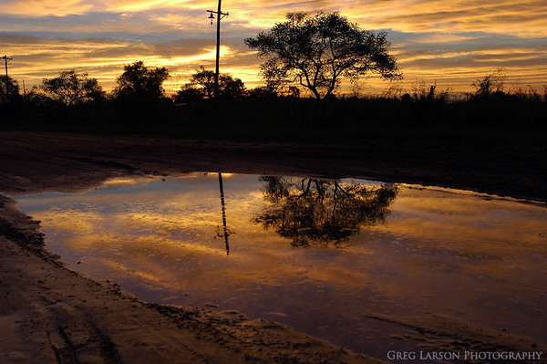 Puddle Reflection, Ibera Lagoon, Argentina