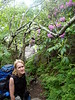 """06/11/04, Doreen in the Rhodies on the Wilburn Ridge/Rhododendron Trail.  Joe!   It's starting to rain!  Coco say's """"Let's camp here"""""""