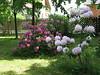 Rhododendron -Grounds, Antonin Dvorak Memorial Museum at Vysoka