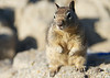Pacific Grove Squirrels_20120508  015