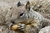 Pacific Grove Wildlife_2014-Aug  026