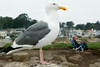 Pacific Grove Wildlife_2014-Aug  004