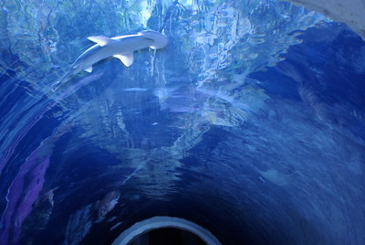 This was an underwater tunnel leading to a different portion of the Aquarium.