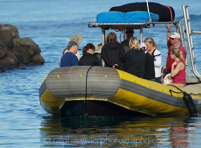 Maui 2013_Whales 088