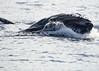 Maui 2013_Whales 161