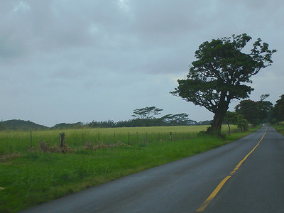 Kauai farm country between Lihue and Koloa (also taken later in the week)