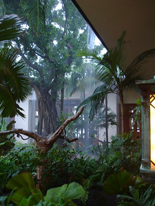 The open air courtyard at the hotel. That's not an artificial waterfall, just rain pouring off the roof.