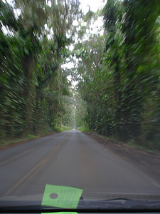 A eucalyptus grove between the airport (Lihue) and Koloa where we were staying (photo was taken later in the week after the torrential rains let up).