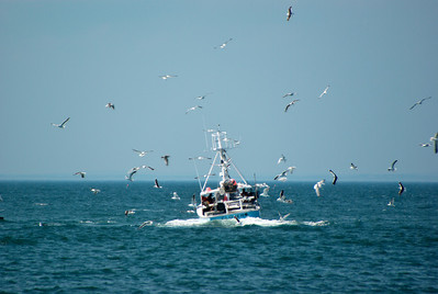 This fishing boat looked like it had to dump something, it basically was running in circles for a while.
