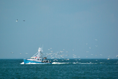 This was one of many fishing boats off the beach.  Had to do a bit of zooming in to see this.