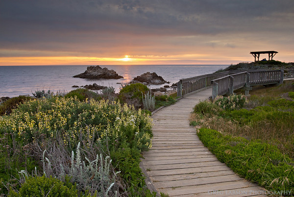 Asilomar State Beach, Pacific Grove, California