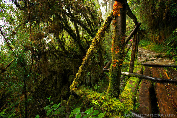 Moss and fungi covered bridge along the Inca Trail