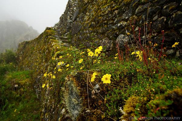 Sayaqmarka Ruins, Inca Trail, Peru