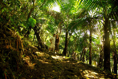 """The Caribbean National Forest, known as El Yunque, is located in the rugged Sierra de Luquillo, 40 km southeast of San Juan (latitude 18º 19' N, longitude 65º 45'W). Get its name from an Indian spirit Yuquiye, which means """"Forest of Clouds"""", that gave the mountain that dominates the 28,000 acre of tropical forest. It is the only tropical forest in the United States National Forest System. Originally set aside in 1876 by the Spanish Crown, the Forest represents one of the oldest reserves in the Western Hemisphere. With over 240 species (26 species are found nowhere else) of trees and plants, give reason to the government of Puerto Rico to spend a great deal of moneymaking to preserve floral species and animals that are on the verge of extinction. The total area is 11,270 ha (75% of Puerto Rico virgin forest is here)."""
