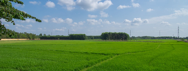 Rice Fields, Ho Chi Minh, Vietnam