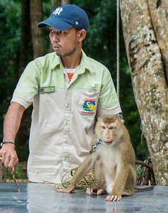 Namuang Safari Park - Trained Monkey