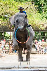 Namuang Safari Park - Elephant