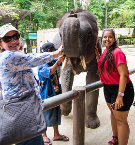 Namuang Safari Park - Nancy Pets
