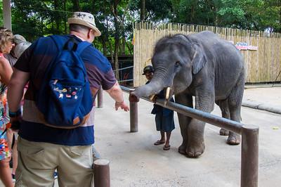 Namuang Safari Park - Baby Elephant