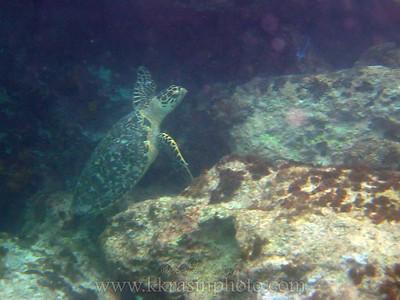 Paul's friend, Larry the sea turtle