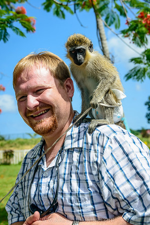 We got to hold lots of monkeys in St. Kitts!